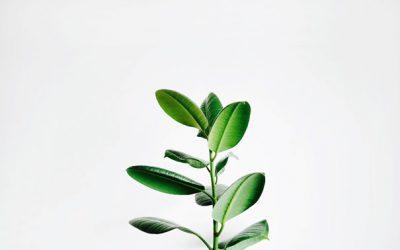 Phytotérapie, se soigner avec des plantes
