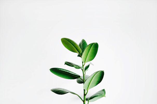 comment-se-soigner-avec-plantes